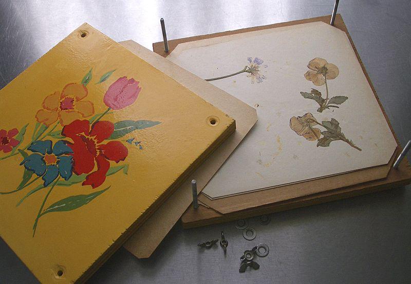 FlowerPress4