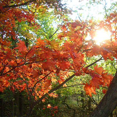 Sun&Leaves