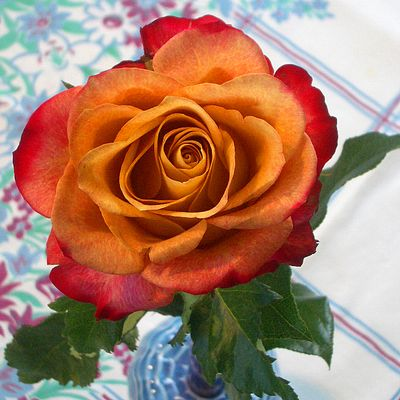 The Simplicity Of A Single Rose