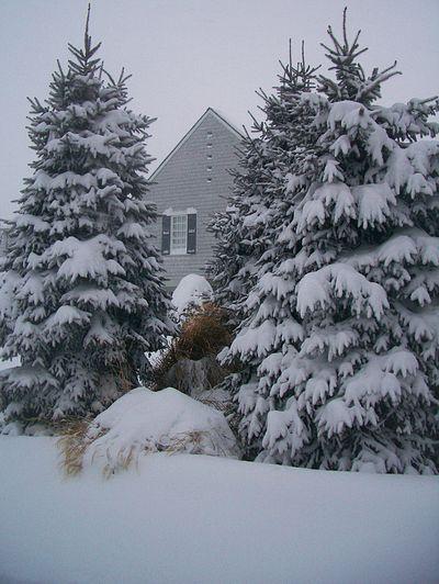 SnowyEvergreens