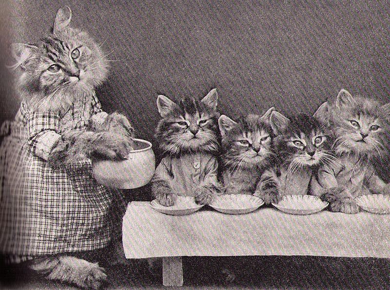 Cats good morning