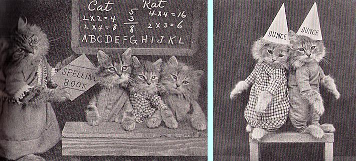 Cats school