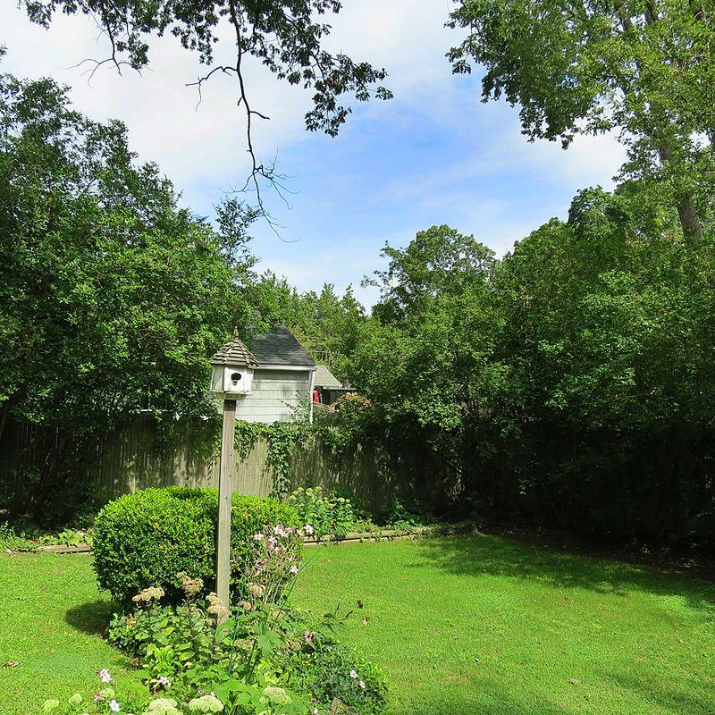 Backyard View Before