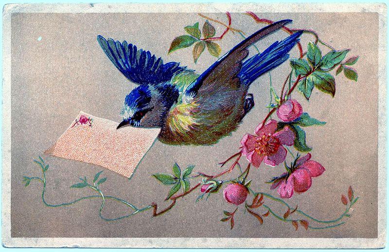 Bird Note