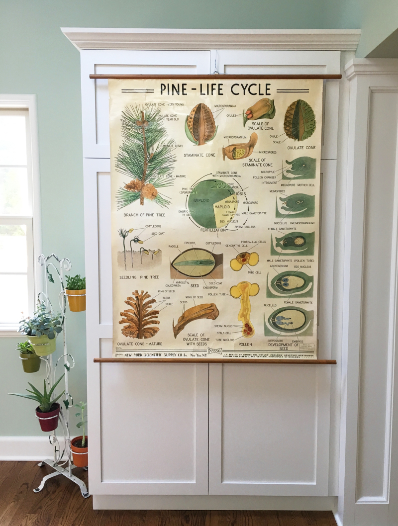 T-Parry Antiques Pine LIfe Cycle Chart