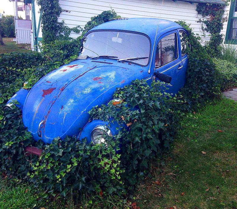 Ivy VW Bug