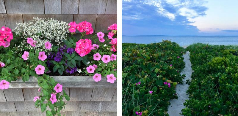 MV Pink Flowers
