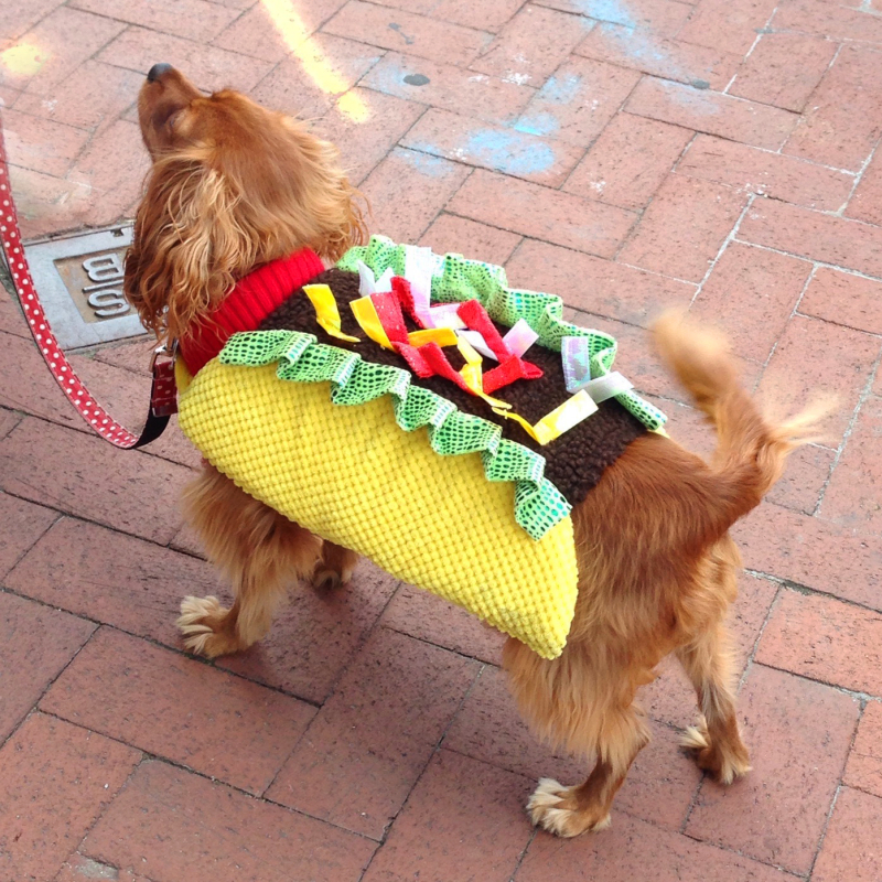 Lucy the Taco