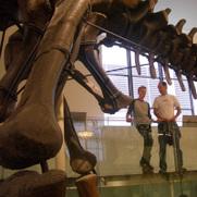 Dinochat